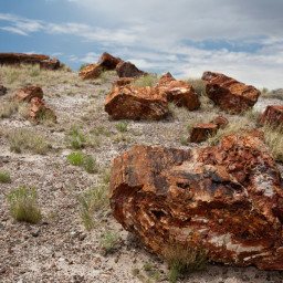 Petrified logs at the Petrified Forest